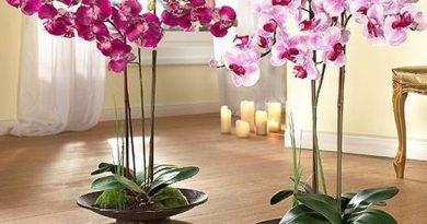 Как се отглежда орхидея